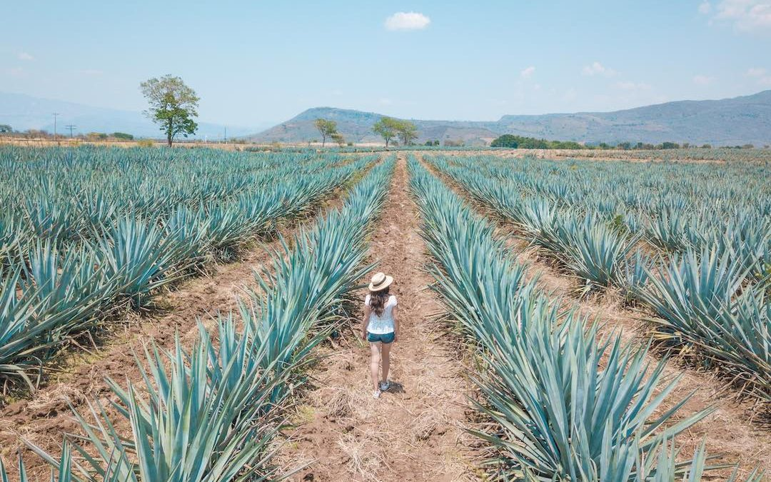 Solo Travel to Mexico (everything you need to know)